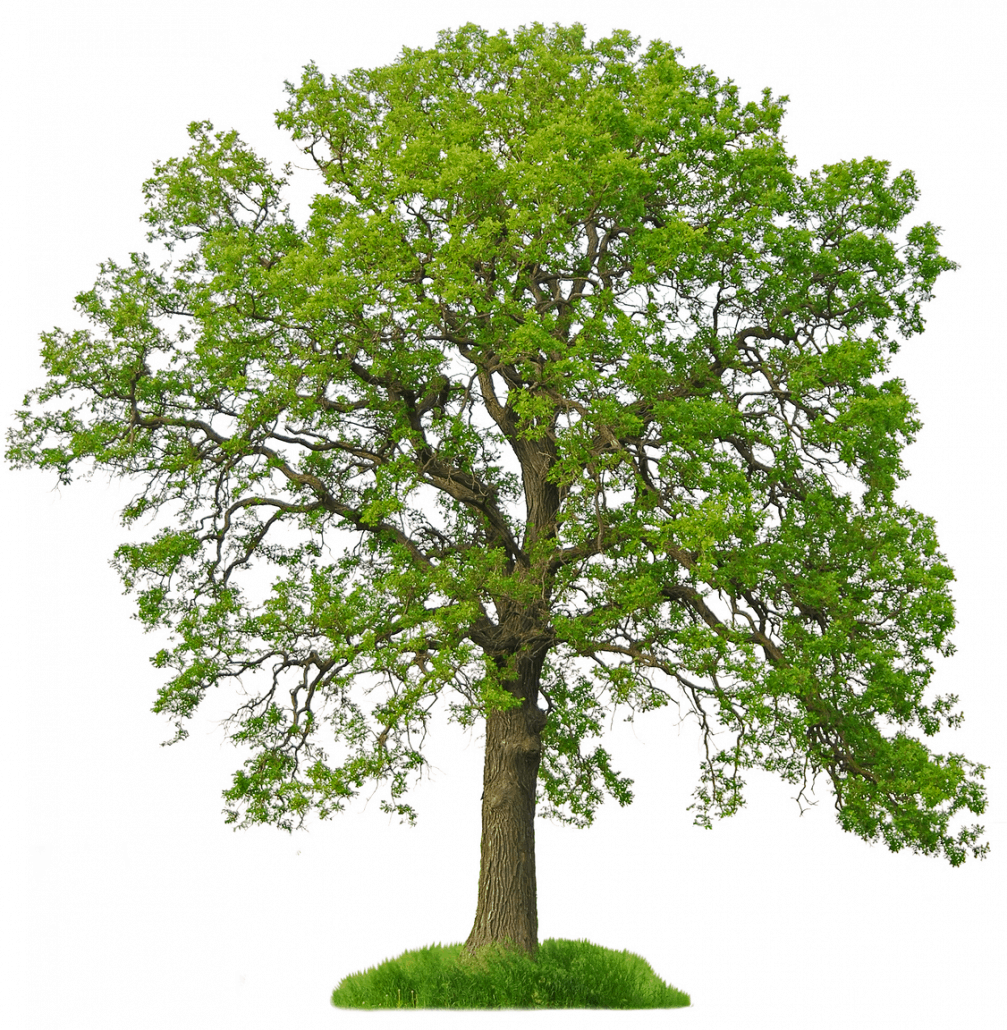 bigstockphoto_isolated_tree_1220034_0
